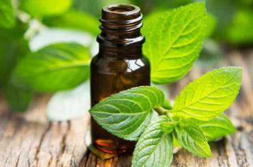 Demand Supply Analysis for a Leading Importer of Essential Oils